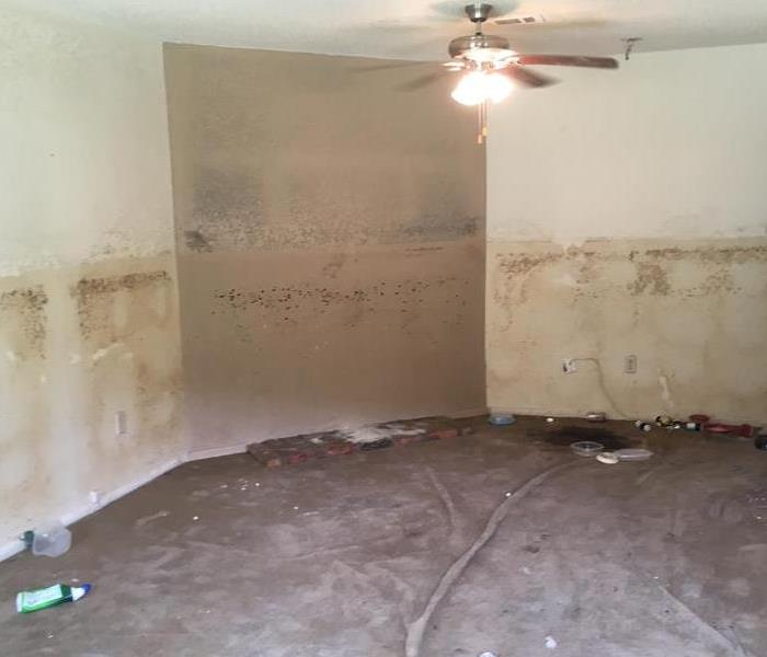 Mold after Flooding
