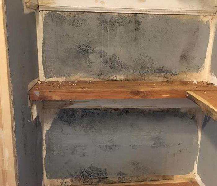 Basement Mold