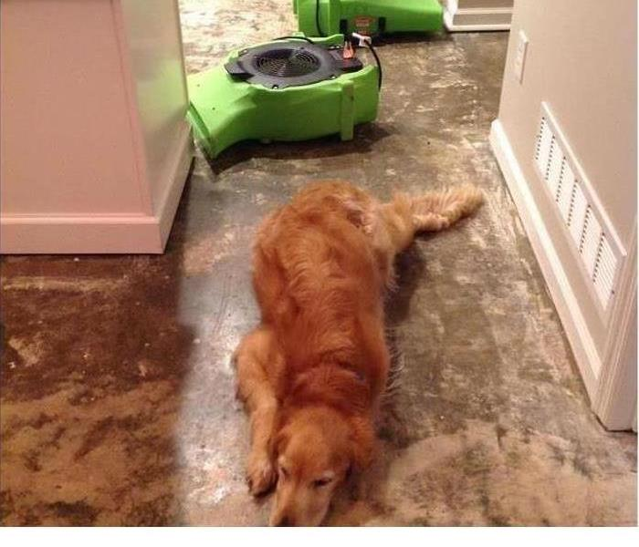 Dog on floor with equipment